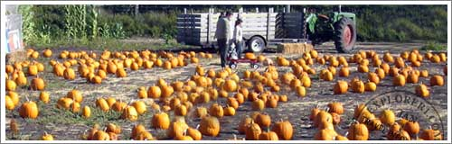 Monterey Pumpkin Patches and Map
