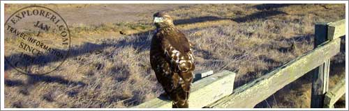 Monterey Area Bird Refuges