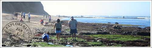 Families enjoy exploring the tide pools at the Fitzgerald Marine Reserve